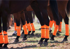 Polo Colour Photography